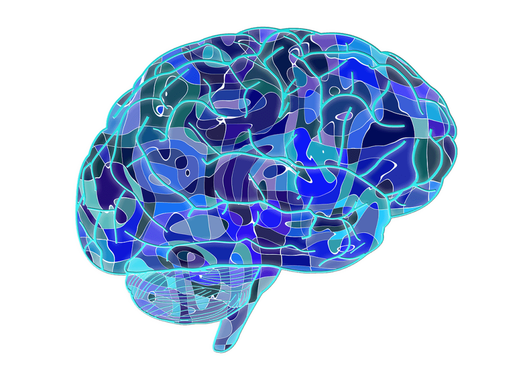 Image of brain for post on hacking your brain